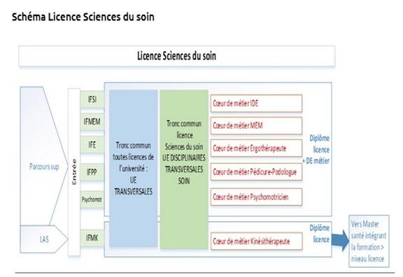 Schéma de Licence des sciences du soin